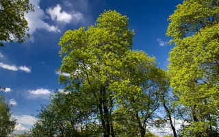 Green Trees wallpapers and stock photos