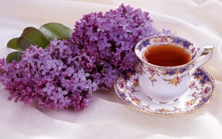 Lilac and Tea wallpapers and stock photos