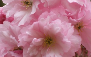 Pink Spring wallpapers and stock photos