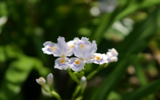 Previous: Silky Flowers