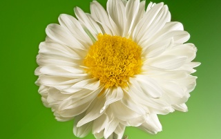 White Flower wallpapers and stock photos