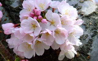 Blossom Bunch wallpapers and stock photos