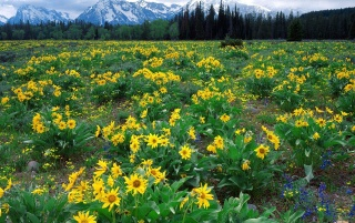 Previous: Yellow Hill Flowers