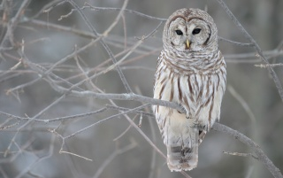 Owl in a tree wallpapers and stock photos