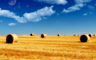 Golden field wallpapers and stock photos