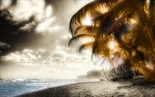Caribean Palm wallpapers and stock photos