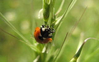 Ladybird wallpapers and stock photos