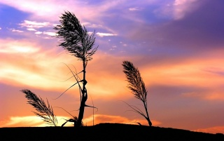 Sunset over grass wallpapers and stock photos