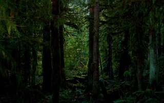 Dark forest wallpapers and stock photos
