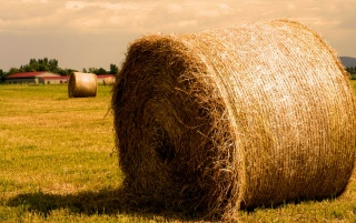 Golden haystack wallpapers and stock photos