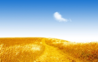 Summer golden field wallpapers and stock photos
