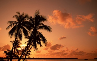 Palms and sunset wallpapers and stock photos