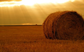 Rolling haystack wallpapers and stock photos