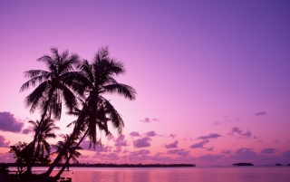 Pink sunset wallpapers and stock photos
