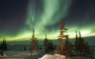Random: Aurora over trees