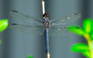 Dragonfly on a stick wallpapers and stock photos