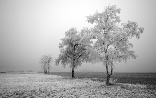 Frozen field and trees wallpapers and stock photos