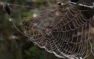 Wet spider web wallpapers and stock photos