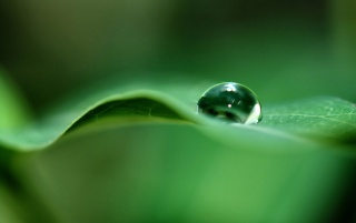 Rain drop on a leaf wallpapers and stock photos