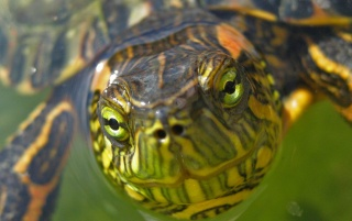 Turtle head wallpapers and stock photos