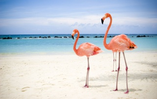 Flamingos on beach wallpapers and stock photos