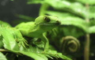 Lizzard in green wallpapers and stock photos