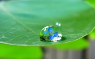 Water drop on leaf wallpapers and stock photos