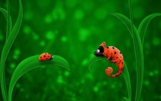Bug and chameleon wallpapers and stock photos