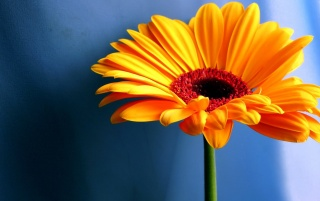Yellow contrast flower wallpapers and stock photos