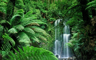beauchamp falls victoria wallpapers and stock photos