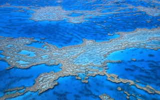 Random: great barrier reef