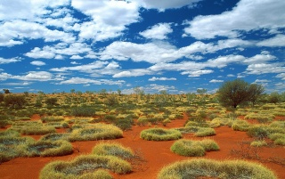 old spinifex rings wallpapers and stock photos