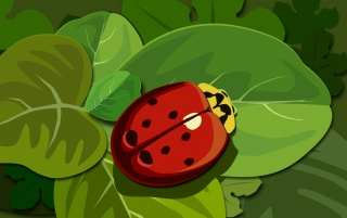 Red ladybug wallpapers and stock photos