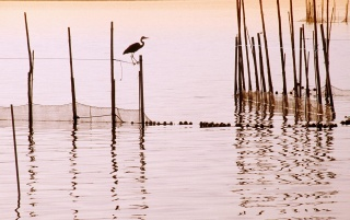 la albufera national park wallpapers and stock photos