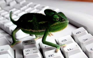 Random: Lizzard on keyboard