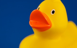 Yellow duck wallpapers and stock photos