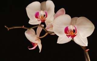 Late night orchids wallpapers and stock photos