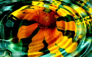 Flower reflection wallpapers and stock photos