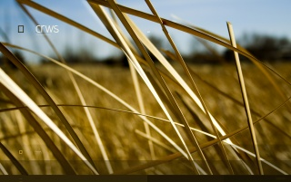 Previous: Golden hay straw