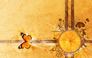 Orange and butterfly wallpapers and stock photos