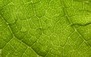 Leaf weaves wallpapers and stock photos