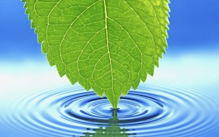 Leaf touching water wallpapers and stock photos