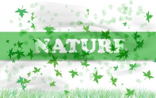 Nature wallpapers and stock photos