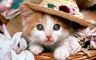 Cat with a hat wallpapers and stock photos