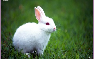 rabbit wallpapers and stock photos