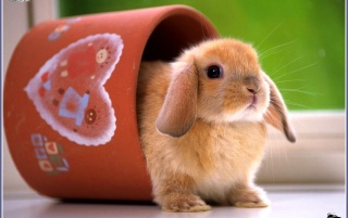 rabbit 1 wallpapers and stock photos