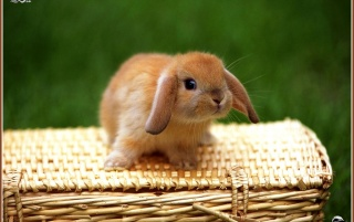 rabbit 2 wallpapers and stock photos