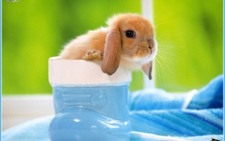 rabbit 5 wallpapers and stock photos