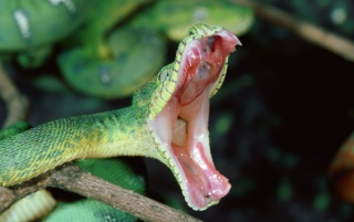 green boa wallpapers and stock photos