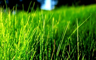 Green grass contrast wallpapers and stock photos